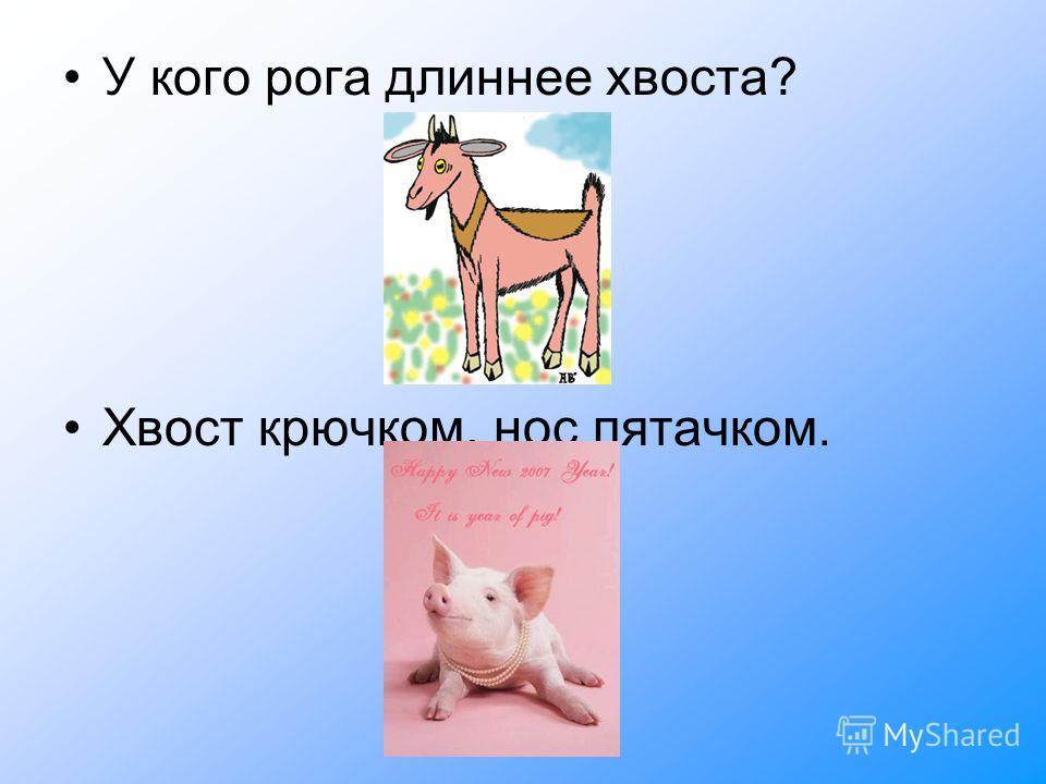 У кого рога длиннее хвоста? Хвост крючком, нос пятачком.