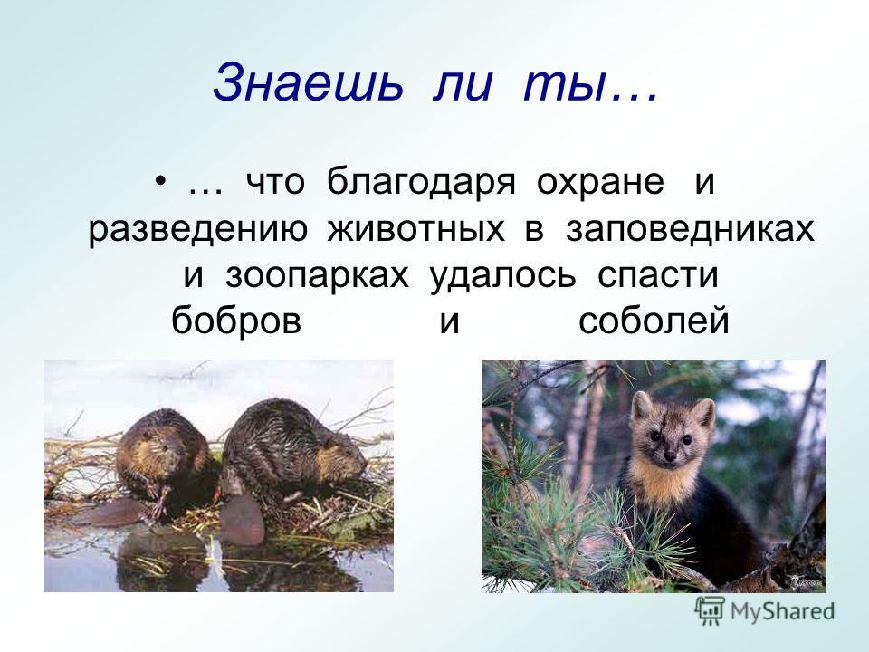 Знаешь ли ты… … что благодаря охране и разведению животных в заповедниках и зоопарках удалось спасти бобров и соболей