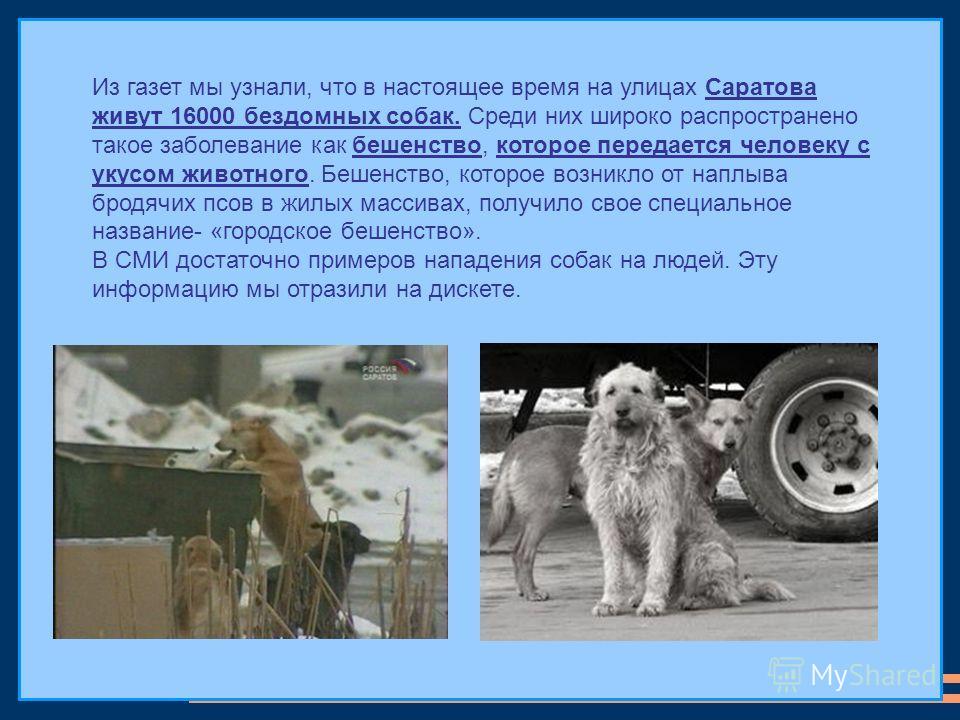 Из газет мы узнали, что в настоящее время на улицах Саратова живут 16000 бездомных собак. Среди них широко распространено такое заболевание как бешенство, которое передается человеку с укусом животного. Бешенство, которое возникло от наплыва бродячих