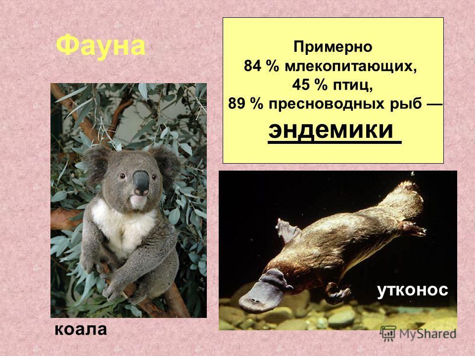 Фауна Примерно 84 % млекопитающих, 45 % птиц, 89 % пресноводных рыб эндемики коала утконос