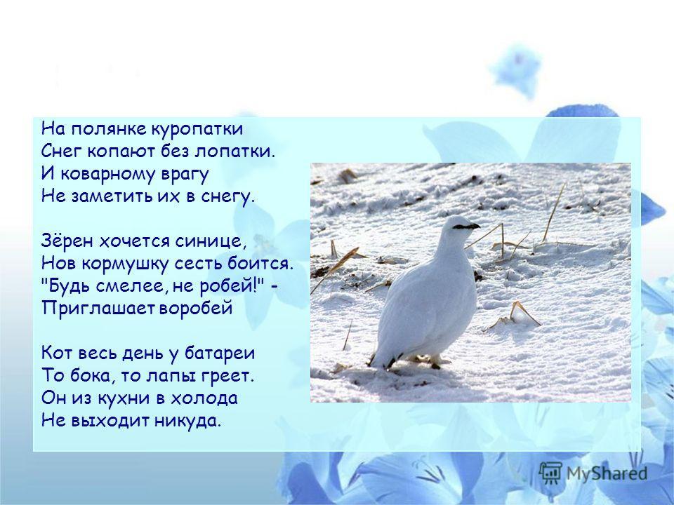 На полянке куропатки Снег копают без лопатки. И коварному врагу Не заметить их в снегу. Зёрен хочется синице, Нов кормушку сесть боится.