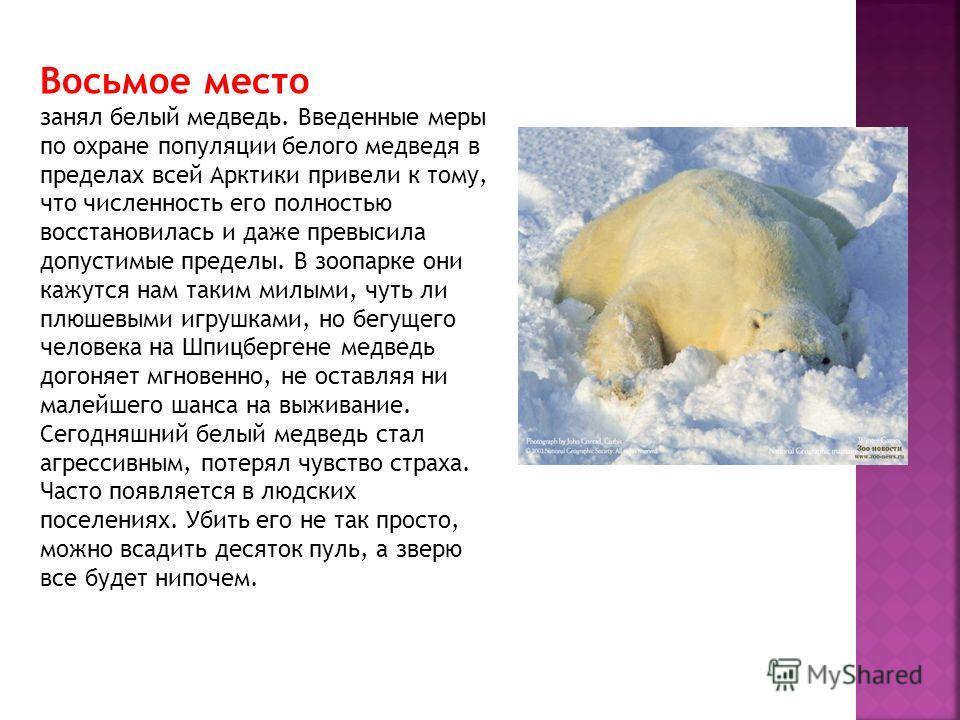 Восьмое место занял белый медведь. Введенные меры по охране популяции белого медведя в пределах всей Арктики привели к тому, что численность его полностью восстановилась и даже превысила допустимые пределы. В зоопарке они кажутся нам таким милыми, чу