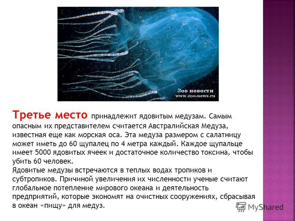 Третье место принадлежит ядовитым медузам. Самым опасным их представителем считается Австралийская Медуза, известная еще как морская оса. Эта медуза размером с салатницу может иметь до 60 щупалец по 4 метра каждый. Каждое щупальце имеет 5000 ядовитых