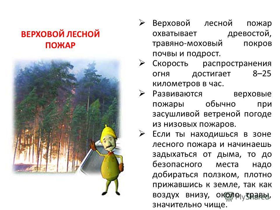ВЕРХОВОЙ ЛЕСНОЙ ПОЖАР Верховой лесной пожар охватывает древостой, травяно-моховый покров почвы и подрост. Скорость распространения огня достигает 8–25 километров в час. Развиваются верховые пожары обычно при засушливой ветреной погоде из низовых пожа
