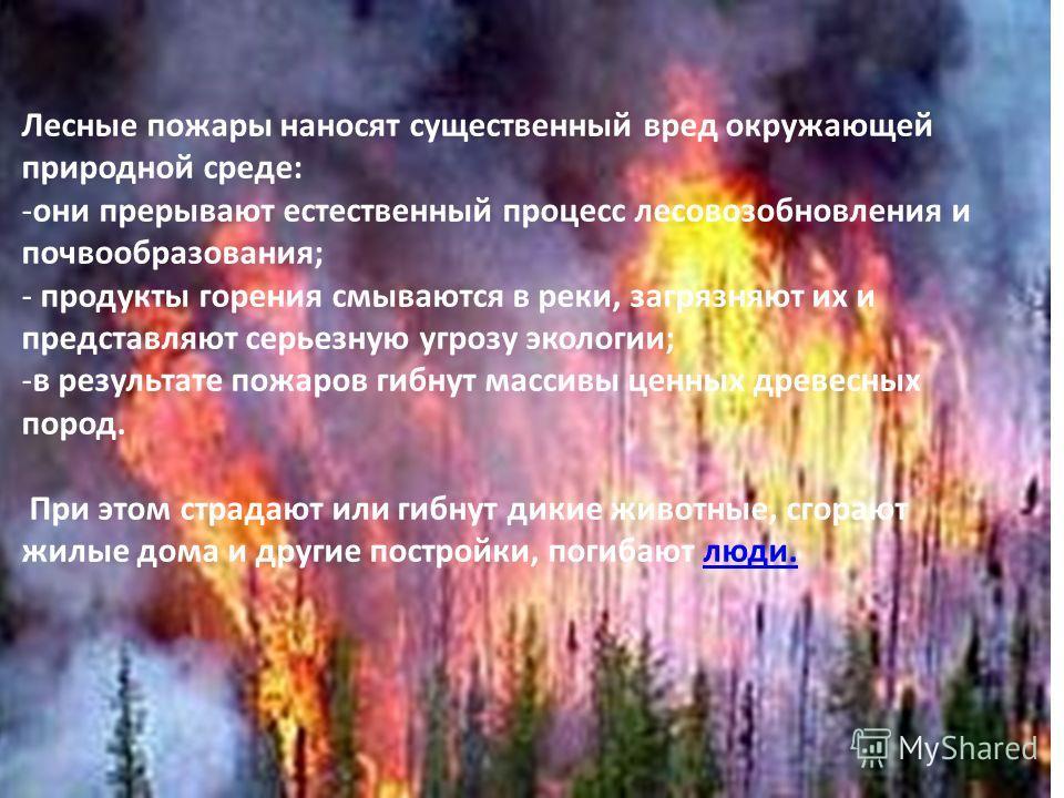Лесные пожары наносят существенный вред окружающей природной среде: -они прерывают естественный процесс лесовозобновления и почвообразования; - продукты горения смываются в реки, загрязняют их и представляют серьезную угрозу экологии; -в результате п