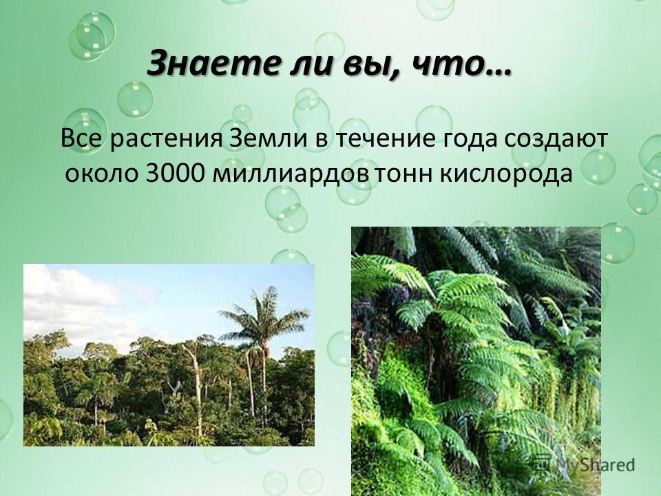 Знаете ли вы, что… Все растения Земли в течение года создают около 3000 миллиардов тонн кислорода