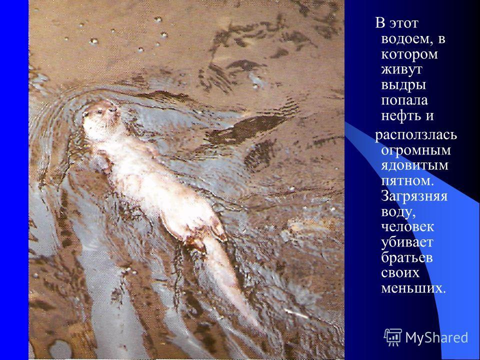 В этот водоем, в котором живут выдры попала нефть и расползлась огромным ядовитым пятном. Загрязняя воду, человек убивает братьев своих меньших.