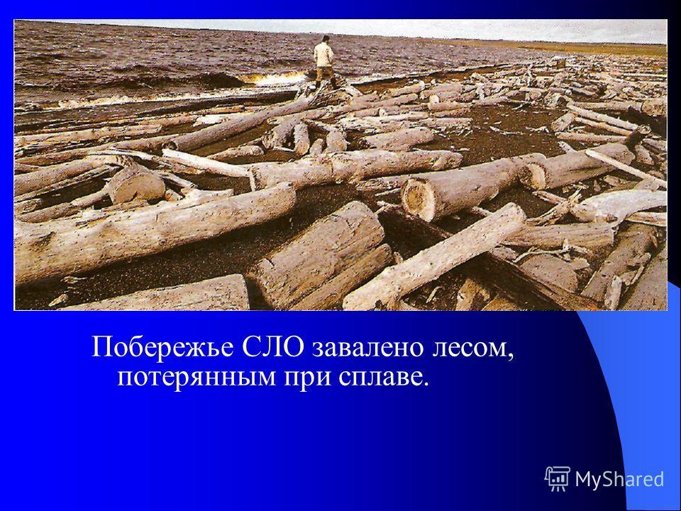 Побережье СЛО завалено лесом, потерянным при сплаве.