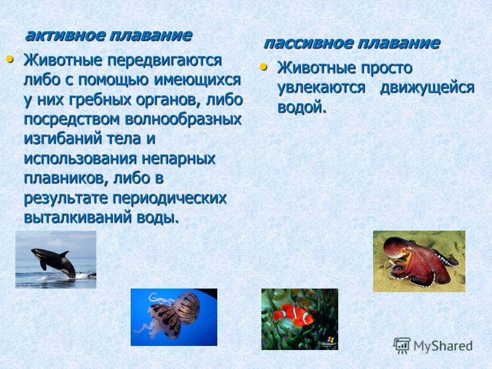 активное плавание Животные передвигаются либо с помощью имеющихся у них гребных органов, либо посредством волнообразных изгибаний тела и использования непарных плавников, либо в результате периодических выталкиваний воды. Животные передвигаются либо