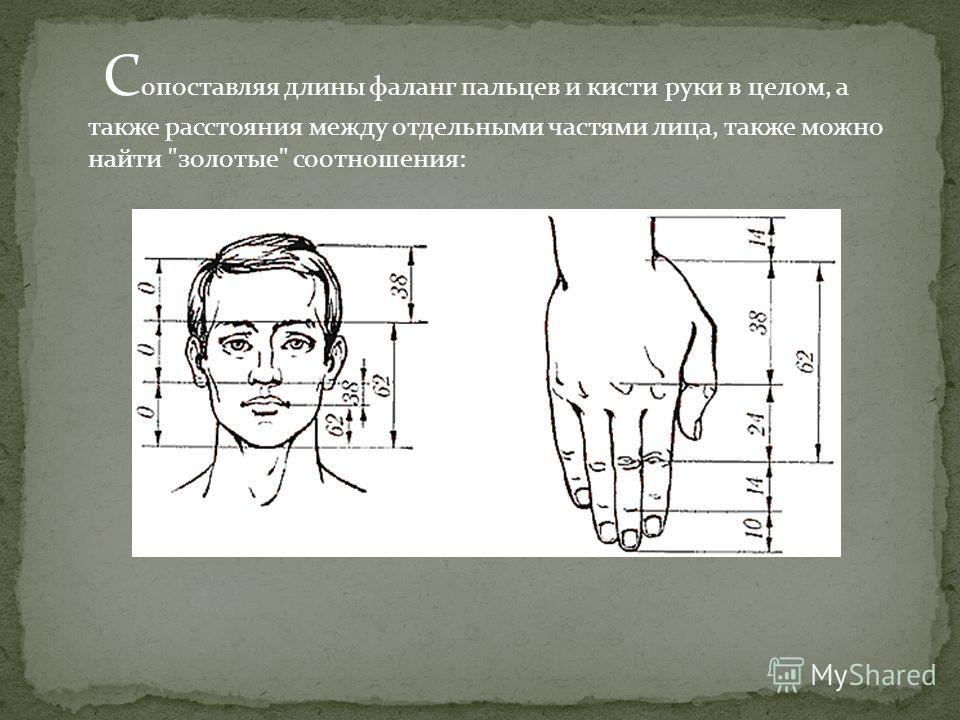 С опоставляя длины фаланг пальцев и кисти руки в целом, а также расстояния между отдельными частями лица, также можно найти золотые соотношения: