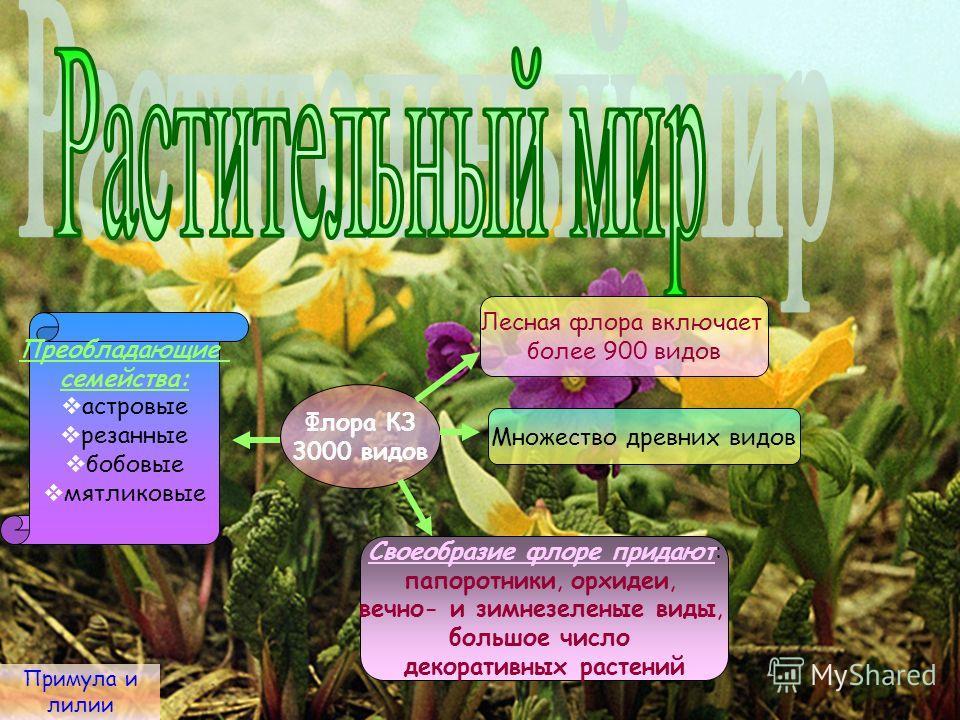 Примула и лилии Флора КЗ 3000 видов Лесная флора включает более 900 видов Множество древних видов Своеобразие флоре придают: папоротники, орхидеи, вечно- и зимнезеленые виды, большое число декоративных растений Преобладающие семейства: астровые резан