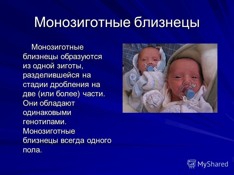 Монозиготные близнецы Монозиготные близнецы образуются из одной зиготы, разделившейся на стадии дробления на две (или более) части. Они обладают одинаковыми генотипами. Монозиготные близнецы всегда одного пола. Монозиготные близнецы образуются из одн