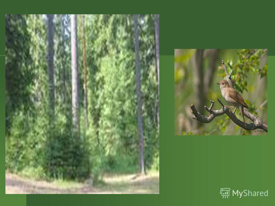 Произошли птицы более 150 млн.лет назад от предков динозавров. Сильно изменяясь, они приобретали разнообразные формы, размеры, окраску, повадки. Это позволило им со временем заселить все континенты, освоить самые разные экологические ниши, широко рас