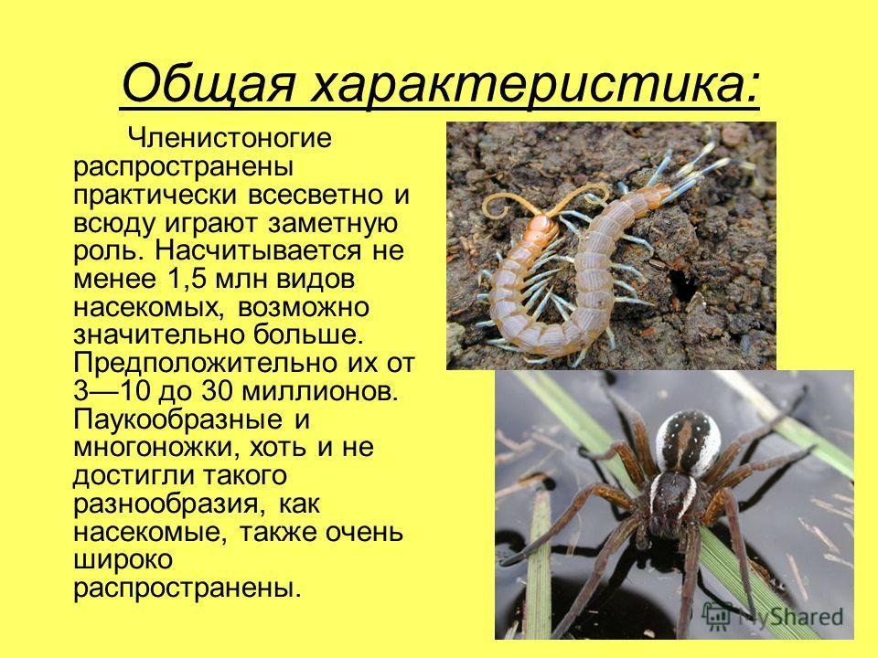 Общая характеристика: Членистоногие распространены практически всесветно и всюду играют заметную роль. Насчитывается не менее 1,5 млн видов насекомых, возможно значительно больше. Предположительно их от 310 до 30 миллионов. Паукообразные и многоножки