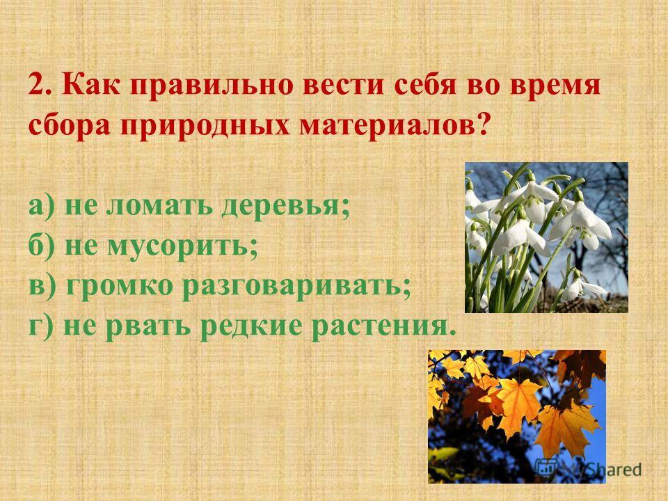 2. Как правильно вести себя во время сбора природных материалов? а) не ломать деревья; б) не мусорить; в) громко разговаривать; г) не рвать редкие растения.