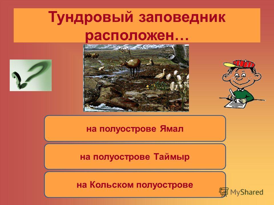 Тундровый заповедник расположен… на полуострове Ямал на полуострове Таймыр на Кольском полуострове