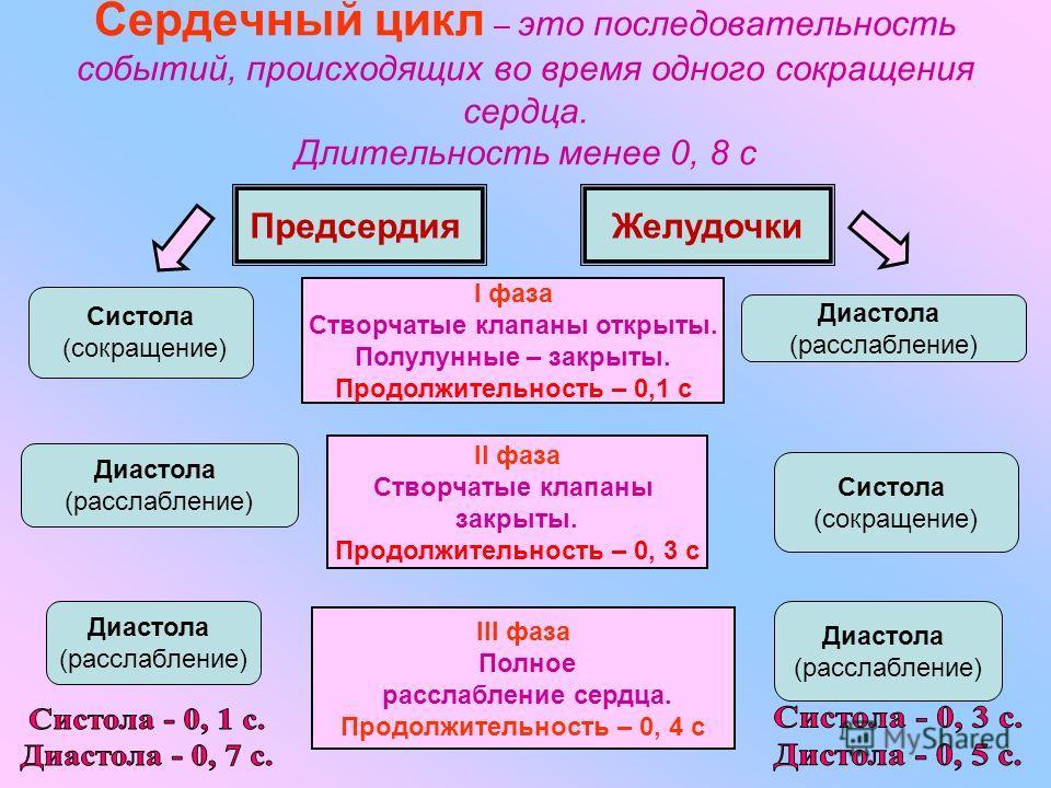 Сердечный цикл – это последовательность событий, происходящих во время одного сокращения сердца. Длительность менее 0, 8 с ПредсердияЖелудочки II фаза Створчатые клапаны закрыты. Продолжительность – 0, 3 с I фаза Створчатые клапаны открыты. Полулунны