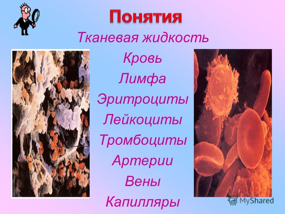 Тканевая жидкость Кровь Лимфа Эритроциты Лейкоциты Тромбоциты Артерии Вены Капилляры