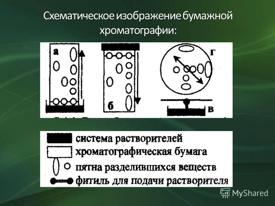 Схематическое изображение бумажной хроматографии:
