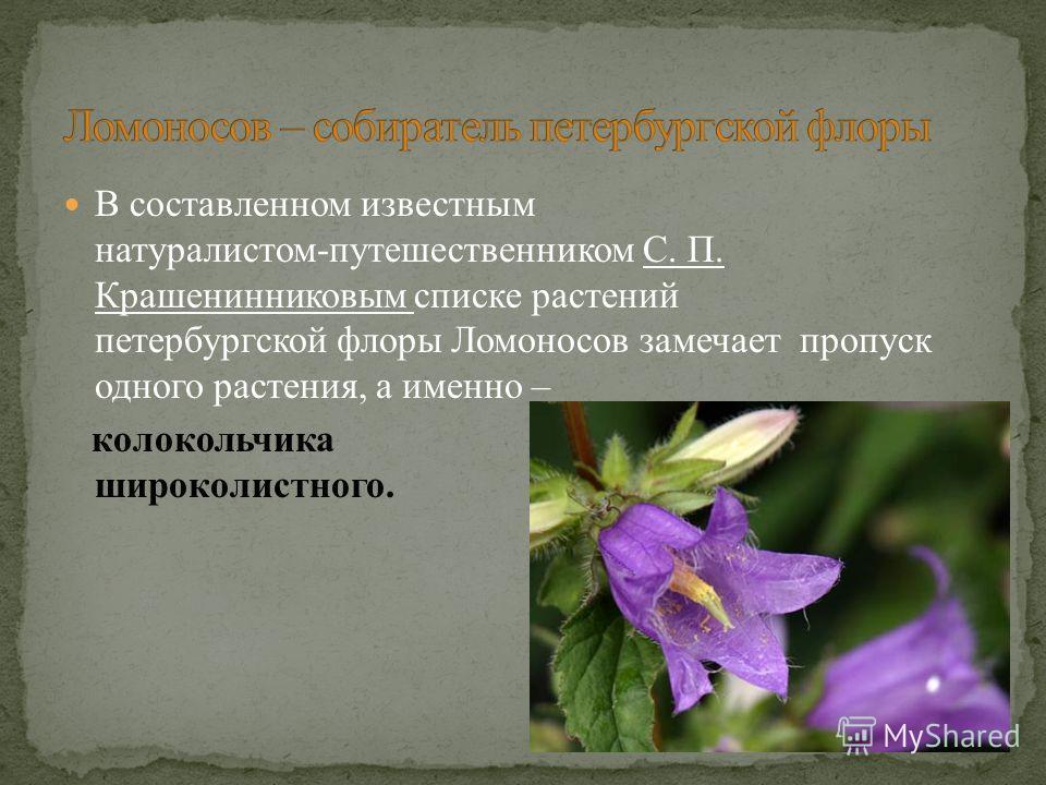 В составленном известным натуралистом-путешественником С. П. Крашенинниковым списке растений петербургской флоры Ломоносов замечает пропуск одного растения, а именно – колокольчика широколистного.