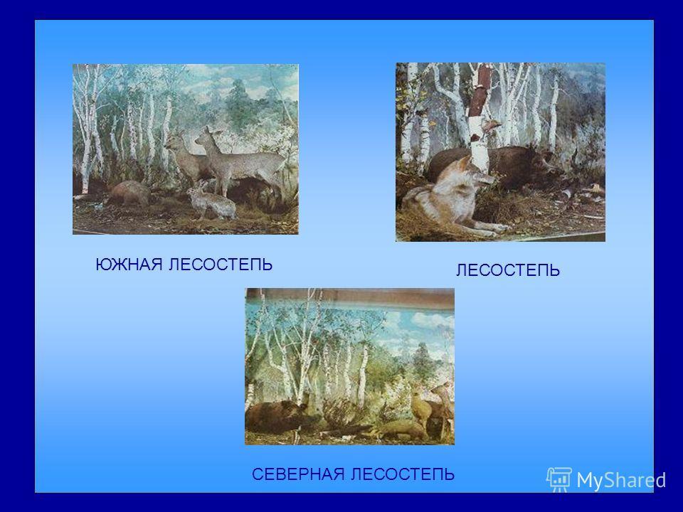 Наша область располагается в пределах трёх природных зон: лесной, лесостепной и степной. Природные зоны Омской области сменяются одна за другой в направлении с севера на юг. Резкие границы провести между ними невозможно, они сменяются постепенно. Дио