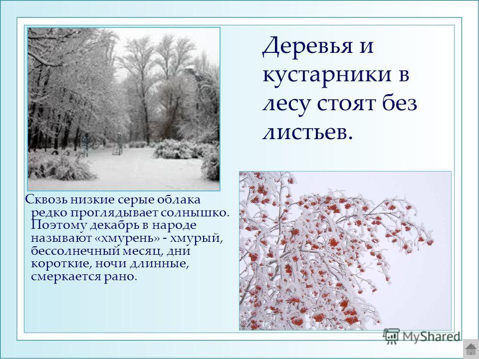 Сквозь низкие серые облака редко проглядывает солнышко. Поэтому декабрь в народе называют «хмурень» - хмурый, бессолнечный месяц, дни короткие, ночи длинные, смеркается рано. Деревья и кустарники в лесу стоят без листьев.