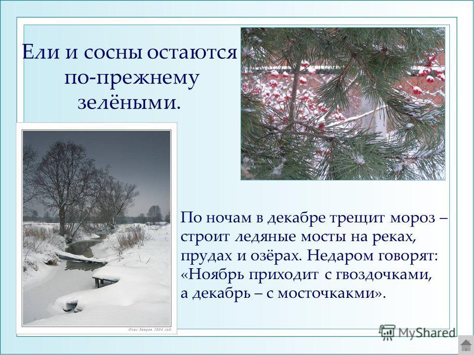 Ели и сосны остаются по-прежнему зелёными. По ночам в декабре трещит мороз – строит ледяные мосты на реках, прудах и озёрах. Недаром говорят: «Ноябрь приходит с гвоздочками, а декабрь – с мосточкакми».