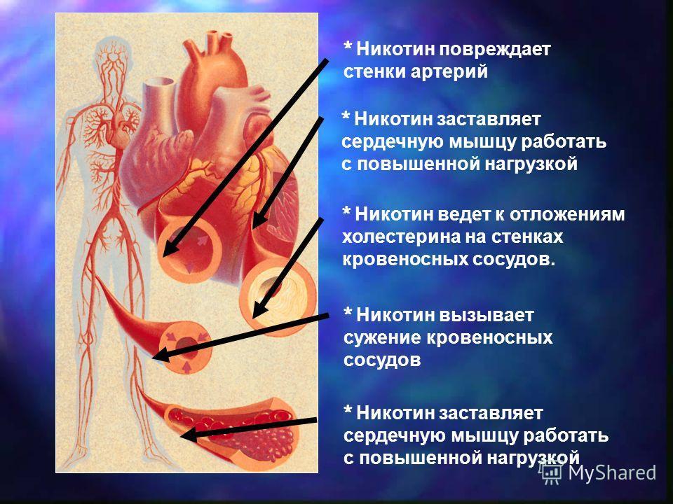 * Никотин вызывает сужение кровеносных сосудов * Никотин повреждает стенки артерий * Никотин заставляет сердечную мышцу работать с повышенной нагрузкой * Никотин ведет к отложениям холестерина на стенках кровеносных сосудов.
