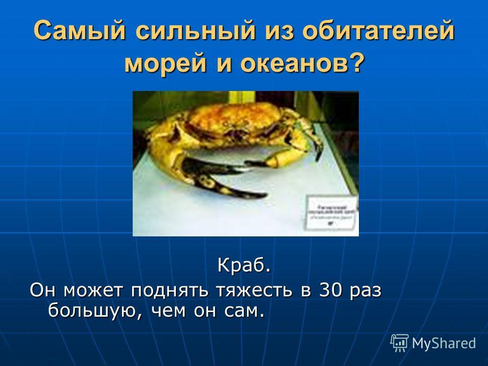 Самый сильный из обитателей морей и океанов? Краб. Он может поднять тяжесть в 30 раз большую, чем он сам.
