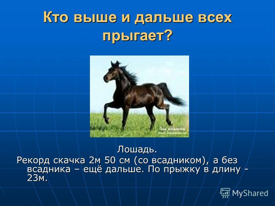 Кто выше и дальше всех прыгает? Лошадь. Рекорд скачка 2м 50 см (со всадником), а без всадника – ещё дальше. По прыжку в длину - 23м.