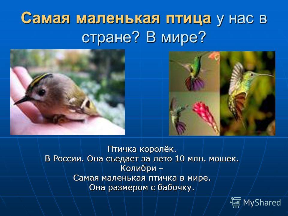 Самая маленькая птица у нас в стране? В мире? Птичка королёк. В России. Она съедает за лето 10 млн. мошек. Колибри – Самая маленькая птичка в мире. Она размером с бабочку.