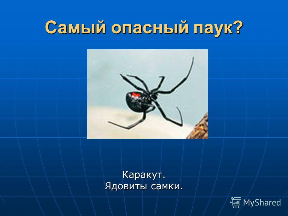 Самый опасный паук? Каракут. Ядовиты самки.