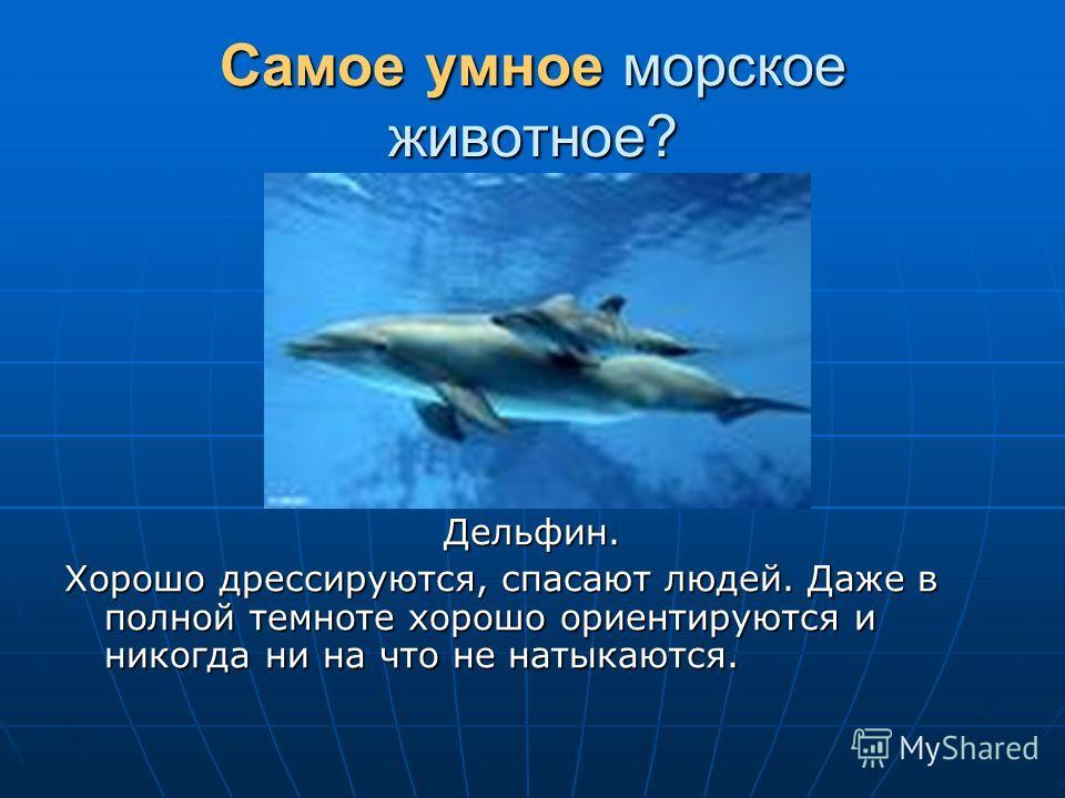 Самое умное морское животное? Дельфин. Хорошо дрессируются, спасают людей. Даже в полной темноте хорошо ориентируются и никогда ни на что не натыкаются.
