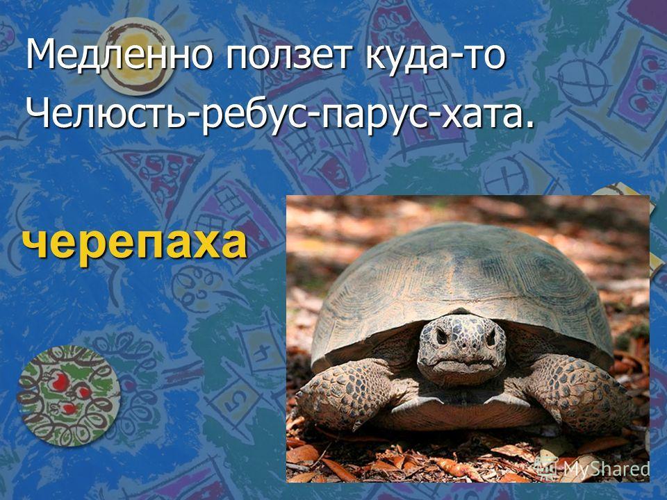 черепаха Медленно ползет куда-то Челюсть-ребус-парус-хата.