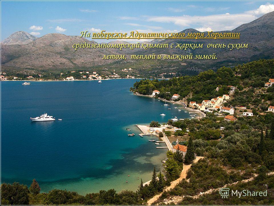 На побережье Адриатического моря Хорватии средиземноморский климат с жарким очень сухим летом, теплой и влажной зимой. побережье Адриатического моря Хорватиипобережье Адриатического моря Хорватии