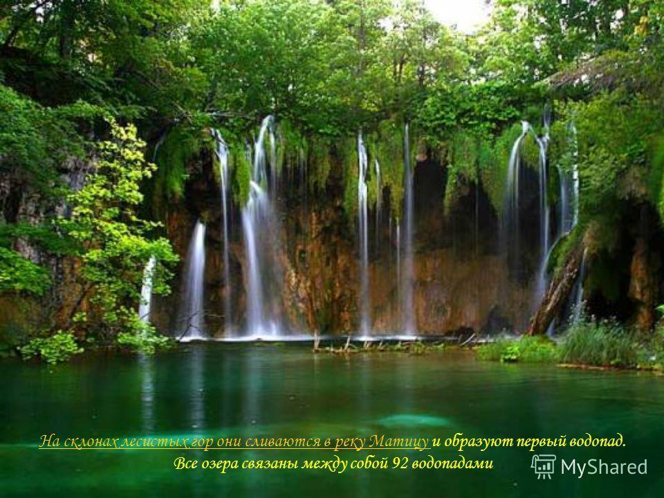 На склонах лесистых гор они сливаются в реку Матицу На склонах лесистых гор они сливаются в реку Матицу и образуют первый водопад. Все озера связаны между собой 92 водопадами