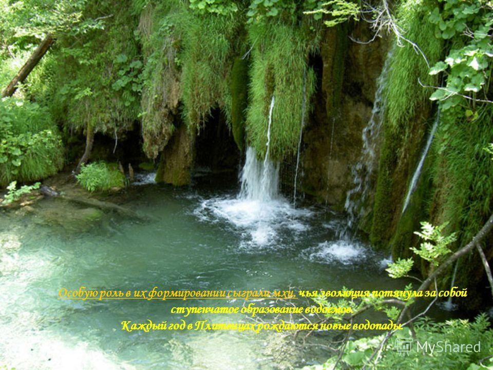 Особую роль в их формировании сыграли мхи, Особую роль в их формировании сыграли мхи, чья эволюция потянула за собой ступенчатое образование водоемов. Каждый год в Плитвицах рождаются новые водопады.