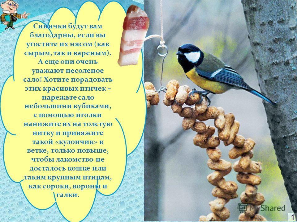 Наполняя несколько кормушек хотя бы раз в неделю, за зиму вы спасете сотни птиц! Чем кормить?