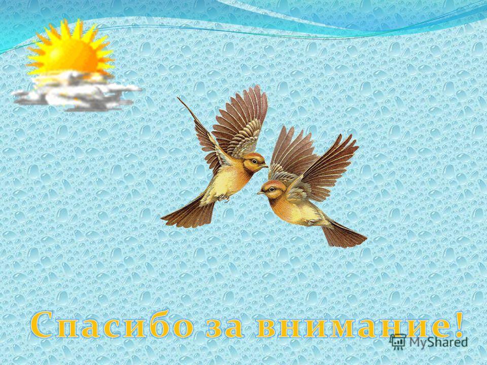 Не дадим птичкам замерзнуть! Чтобы птицы пели летом, надо накормить их зимой!!!
