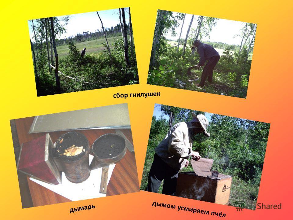 дымарь сбор гнилушек дымом усмиряем пчёл