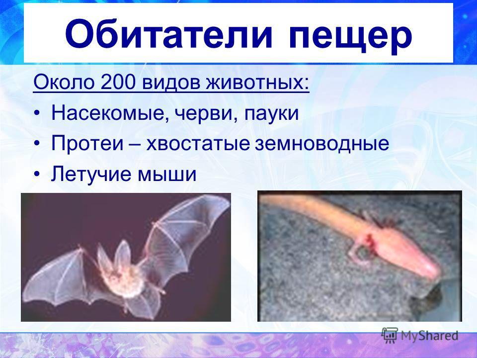 Обитатели пещер Около 200 видов животных: Насекомые, черви, пауки Протеи – хвостатые земноводные Летучие мыши