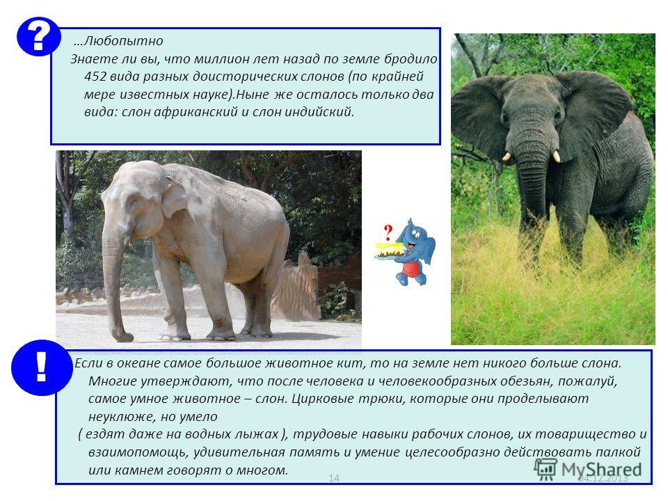 1404.12.2013 …Любопытно Знаете ли вы, что миллион лет назад по земле бродило 452 вида разных доисторических слонов (по крайней мере известных науке).Ныне же осталось только два вида: слон африканский и слон индийский. ? Если в океане самое большое жи