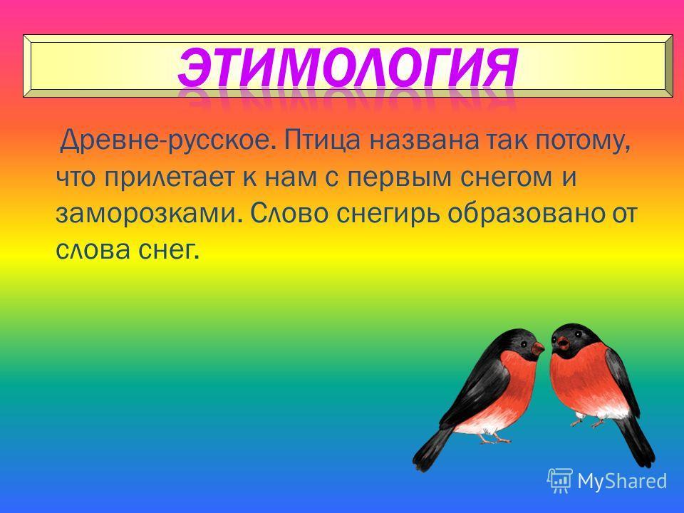 Древне-русское. Птица названа так потому, что прилетает к нам с первым снегом и заморозками. Слово снегирь образовано от слова снег.