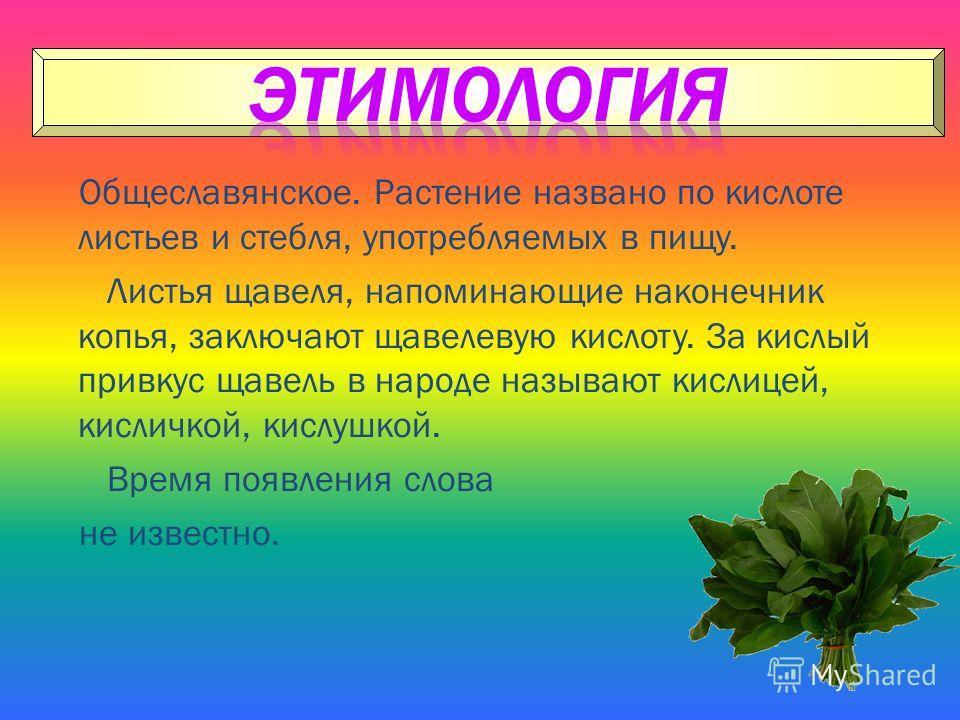 Общеславянское. Растение названо по кислоте листьев и стебля, употребляемых в пищу. Листья щавеля, напоминающие наконечник копья, заключают щавелевую кислоту. За кислый привкус щавель в народе называют кислицей, кисличкой, кислушкой. Время появления