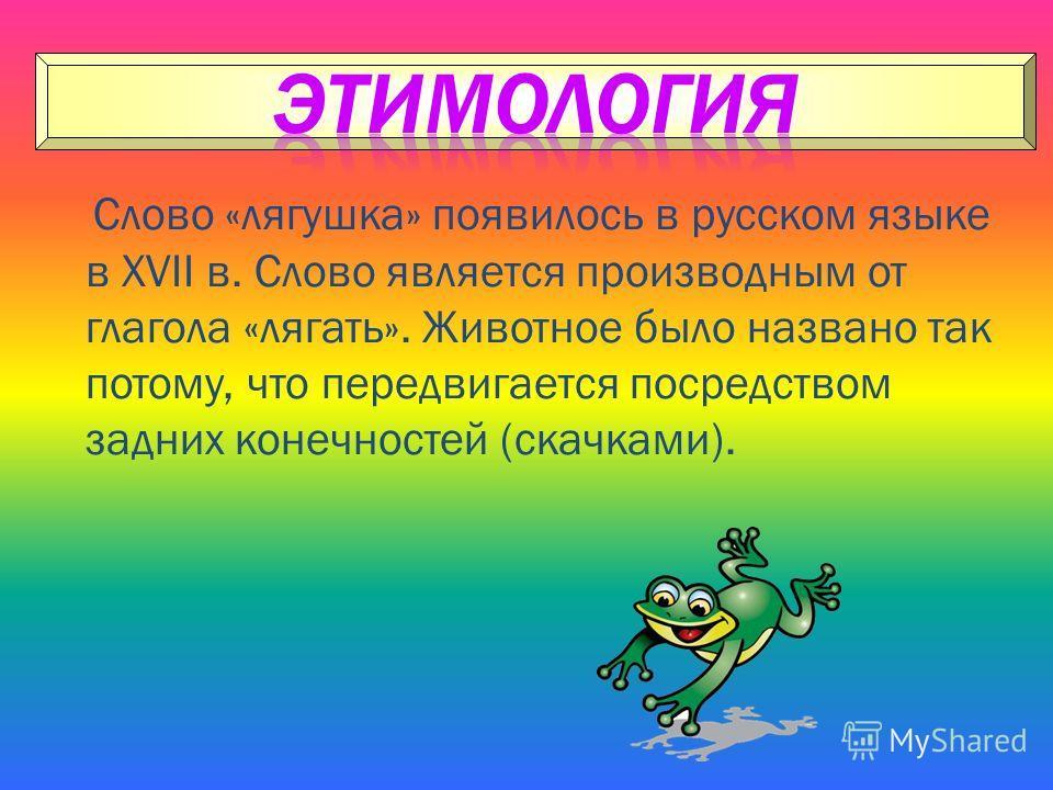 Слово «лягушка» появилось в русском языке в XVII в. Слово является производным от глагола «лягать». Животное было названо так потому, что передвигается посредством задних конечностей (скачками).