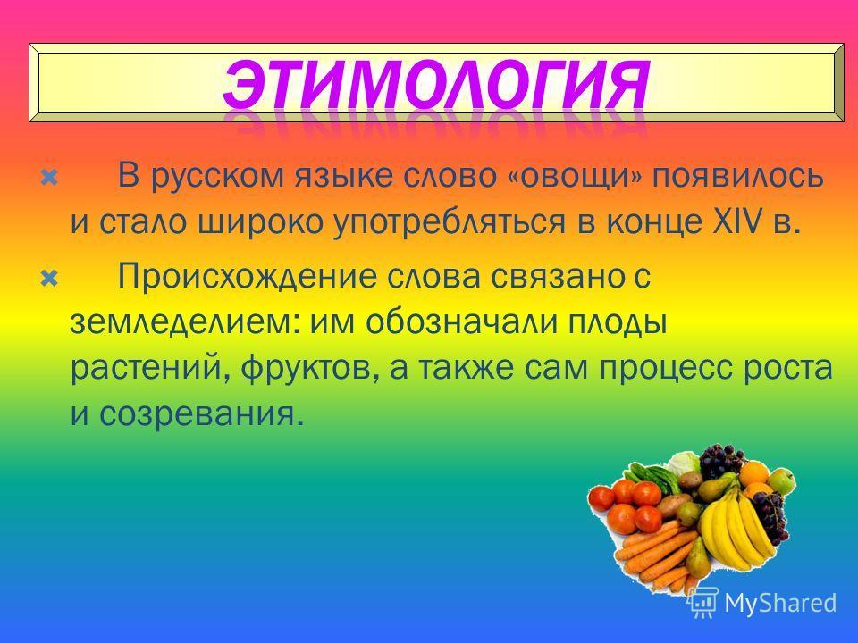 В русском языке слово «овощи» появилось и стало широко употребляться в конце XIV в. Происхождение слова связано с земледелием: им обозначали плоды растений, фруктов, а также сам процесс роста и созревания.