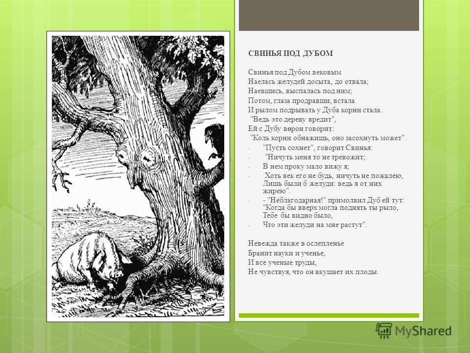 СВИНЬЯ ПОД ДУБОМ Свинья под Дубом вековым Наелась желудей досыта, до отвала; Наевшись, выспалась под ним; Потом, глаза продравши, встала И рылом подрывать у Дуба корни стала.