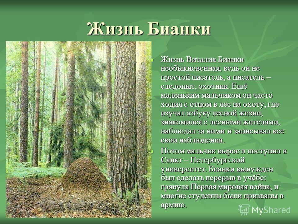 Жизнь Бианки Жизнь Виталия Бианки необыкновенная, ведь он не простой писатель, а писатель – следопыт, охотник. Ещё маленьким мальчиком он часто ходил с отцом в лес на охоту, где изучал азбуку лесной жизни, знакомился с лесными жителями, наблюдал за н