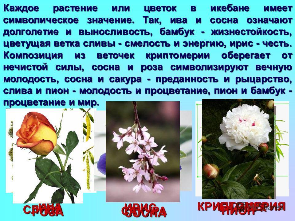Каждое растение или цветок в икебане имеет символическое значение. Так, ива и сосна означают долголетие и выносливость, бамбук - жизнестойкость, цветущая ветка сливы - смелость и энергию, ирис - честь. Композиция из веточек криптомерии оберегает от н