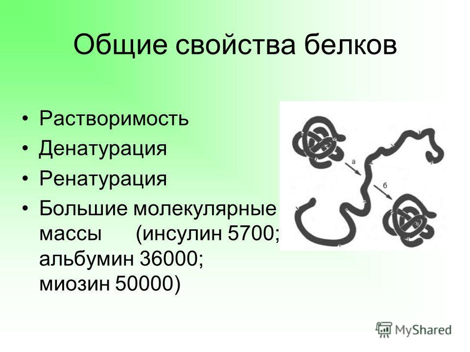 Общие свойства белков Растворимость Денатурация Ренатурация Большие молекулярные массы (инсулин 5700; альбумин 36000; миозин 50000)
